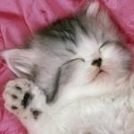 眠れない時のおすすめ動画はこれっ!音フェチにもぴったり!